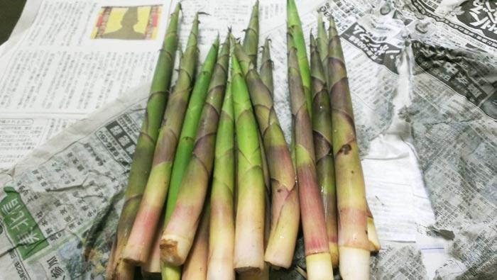 採れたての根曲がり竹