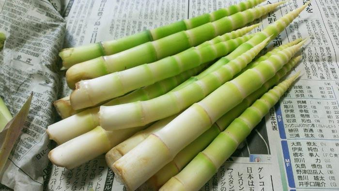 皮をむいた根曲がり竹