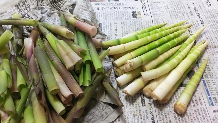 根曲がり竹の皮をむき終わった状態