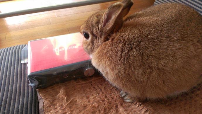 Focusrite Scarlett Solo Studio g2に興味を示すウサギ