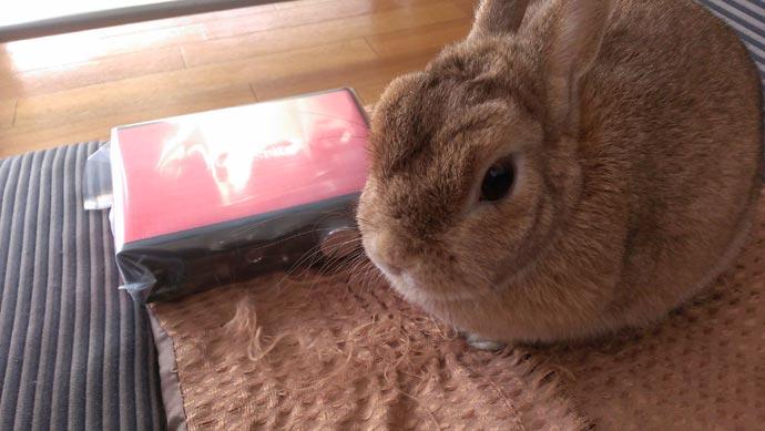 Focusrite Scarlett Solo Studio g2に飽きるウサギ