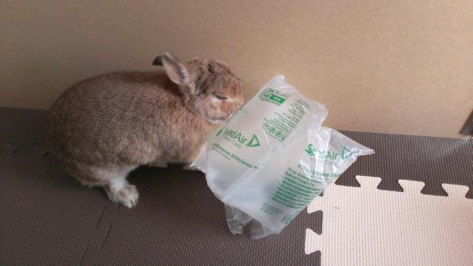 梱包材に怒りをぶつけるウサギ