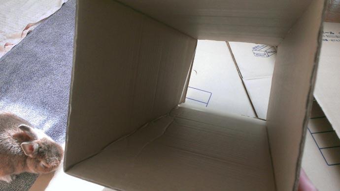 段ボールでトンネルを作成