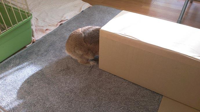 ウサギの遊び場作成中